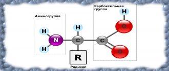 Про аминокислоты