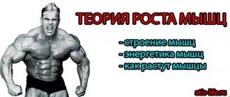 Рост мышц