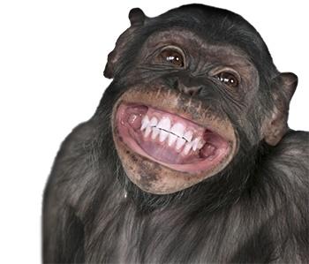Способность смеяться дана не только приматам Хомо Сапиенс