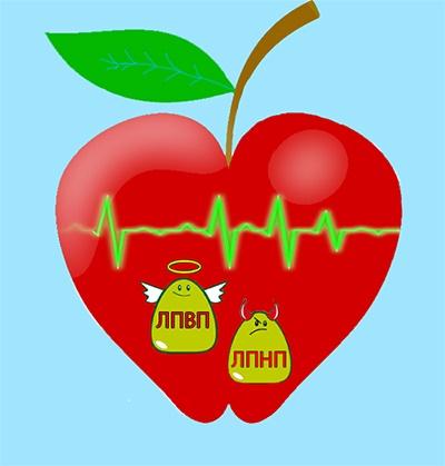 Яблоки полезны в борьбе с холестерином крови